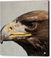 Raptor Wild Bird Of Prey Portrait Closeup Acrylic Print
