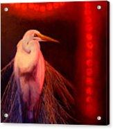 Rasberry Glow Acrylic Print
