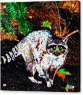 Rascally Raccoon Acrylic Print by Will Borden