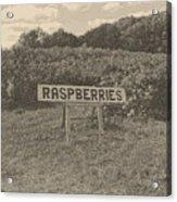 Raspberry Fields  Acrylic Print