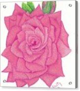Raspberry Pink Acrylic Print