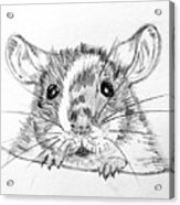 Rat Sketch Acrylic Print