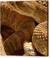 Rattlesnake And Rattle Acrylic Print