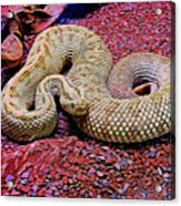 Rattlesnake In Abstract Acrylic Print