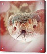 Rattlesnake Red Acrylic Print