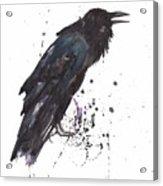 Raven  Black Bird Gothic Art Acrylic Print by Alison Fennell