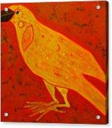 Raven Close Up Acrylic Print