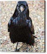 Raven Acrylic Print