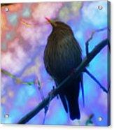 Raven In Spring Acrylic Print