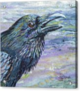 Raven Study 4 Acrylic Print