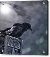 Raven Twilight Acrylic Print
