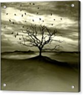 Raven Valley Acrylic Print