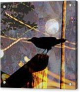 Ravens Night Acrylic Print