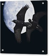 Ravens Of The Night Acrylic Print by Wingsdomain Art and Photography