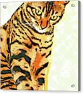 Ravi Series #3 Acrylic Print