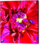 Raving Beauty Acrylic Print