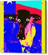 Ray's Cow Acrylic Print