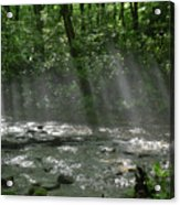 Rays Through The Trees Acrylic Print