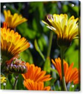 Reach For The Sun 1 Acrylic Print