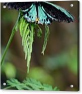 Ready For Take Off Acrylic Print