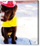 Fire Pup Ready To Roll Acrylic Print