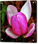 Ready To Pop Into Spring Acrylic Print