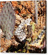 Real Cactus In An Actual Desert  Acrylic Print