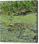 Real Florida Acrylic Print