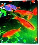 Real Gold Fish Acrylic Print