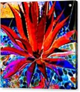 Red Agave Acrylic Print