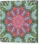 Red Amaryllis Trio Kaleidoscope Acrylic Print