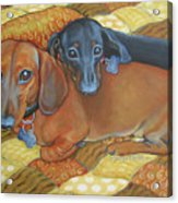 Red And Black Dachshunds - Best Buds Acrylic Print