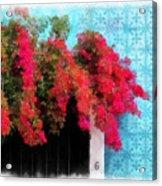 Bouganvillea And Blue Azulejos Acrylic Print