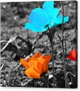 Red And Blue Flowers On Gray Background Acrylic Print