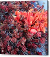 Red And Burgundy Succulent Plants Acrylic Print