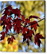 Red And Gold Acrylic Print