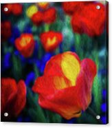 Red And Orange Tulips Acrylic Print