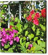 Red And Purple Flowers Acrylic Print