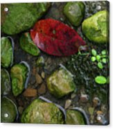 Red And Rocks Acrylic Print