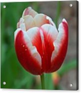 Red And White Bloom Acrylic Print
