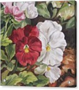 Red And White Pansies Acrylic Print