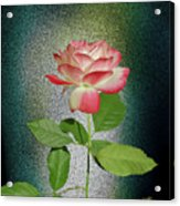 Red And White Rose5 Cutout Acrylic Print