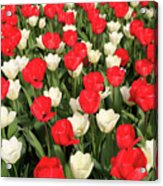 Red And White Acrylic Print by Tracy Hall
