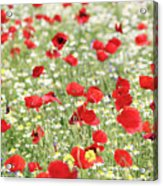 Red And White Wild Flowers Spring Scene Acrylic Print