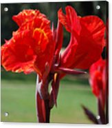 Red And Yellow Asiatic Lilies Acrylic Print