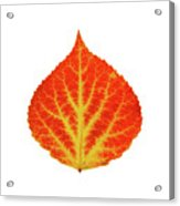 Red And Yellow Aspen Leaf 10 Acrylic Print