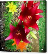 Red And Yellow Garden Flowers Acrylic Print