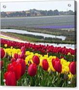 Red And Yellow Tulip Fields Acrylic Print