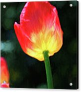 Red And Yellow Tulip - Photopainting Acrylic Print