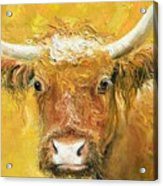 Red Angus Cow Acrylic Print
